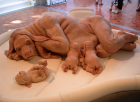 "Patricia Piccinini, ""The Young Family"". fredhandl.blogspot.com nuotr."