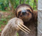 https://www.worldlandtrust.org/wp-content/uploads/2017/09/sloth.jpg
